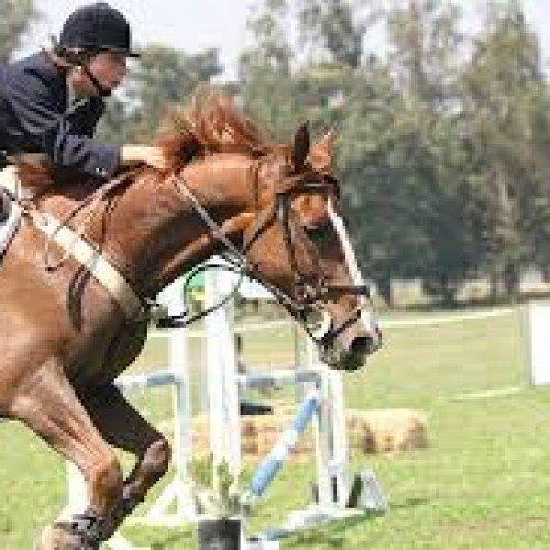 ¿Qué vestuario necesitas para practicar la equitación?